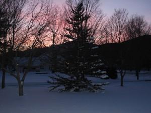 8238_Winter