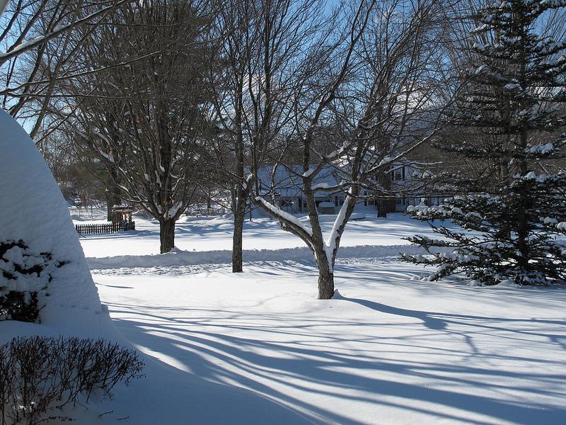 8257_Winter