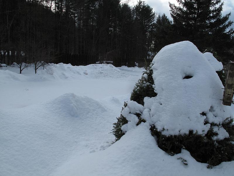 8268_Winter