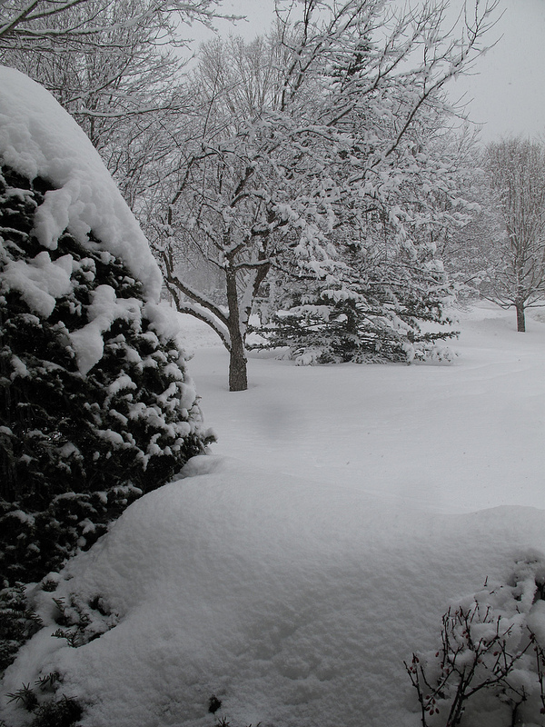 8388_Winter