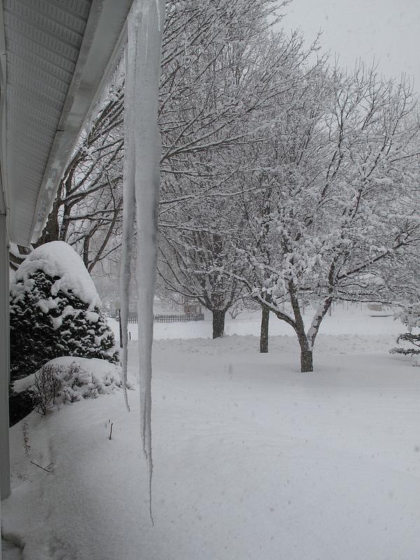 8391_Winter
