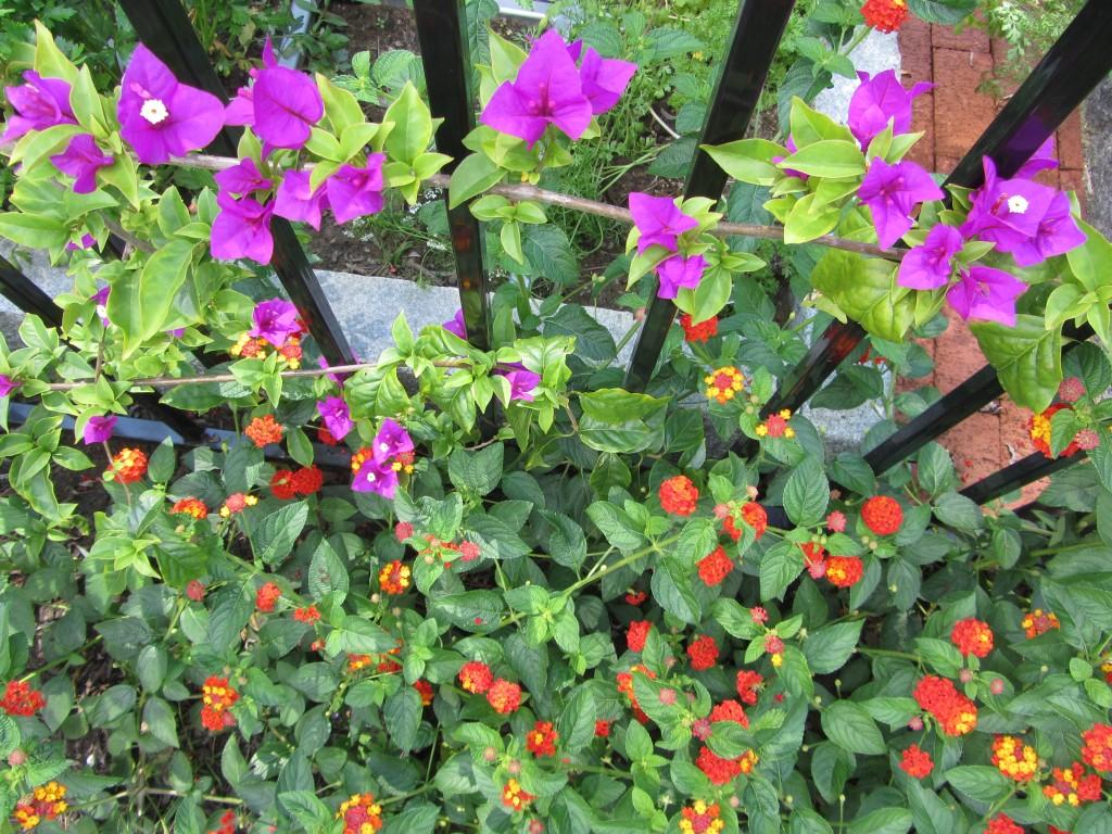 201209 Garden 008