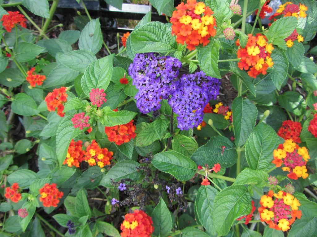 201209 Garden 012