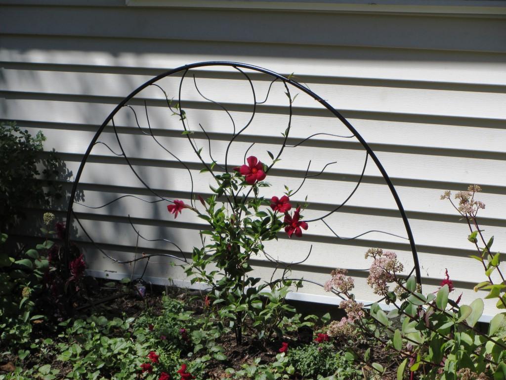 201209 Garden 026