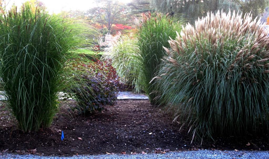 20090930 Garden 151