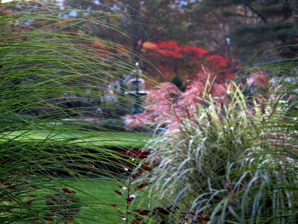 20090930 Garden 152