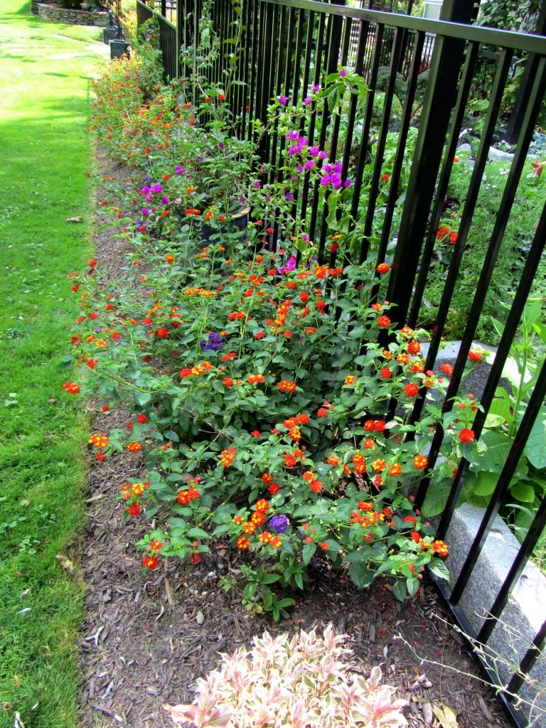 201209 Garden 007