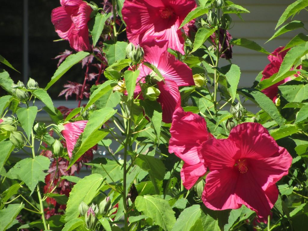 201209 Garden 039