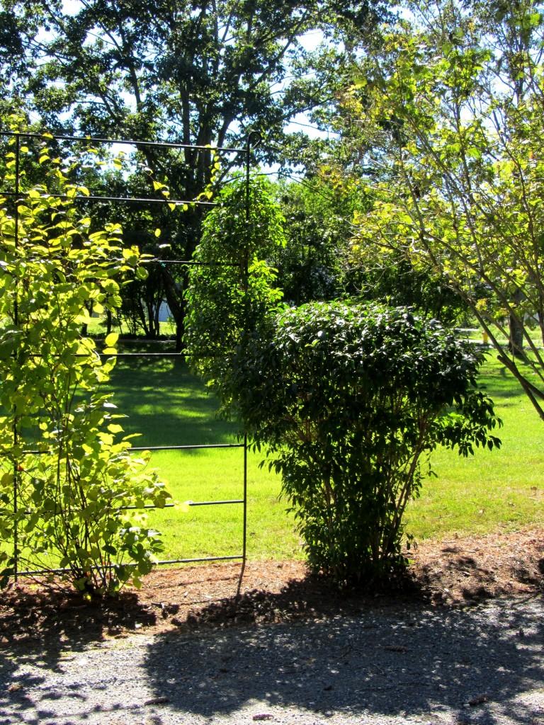 201209 Garden 052