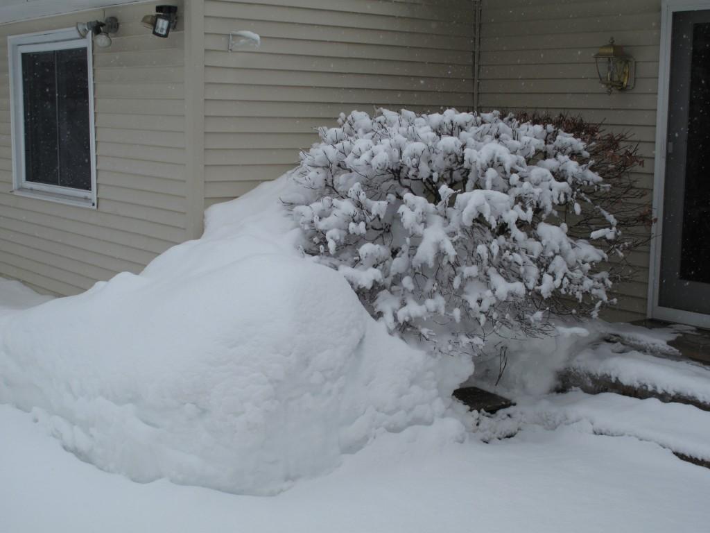IMG_8399 201102 VT Winter Garden