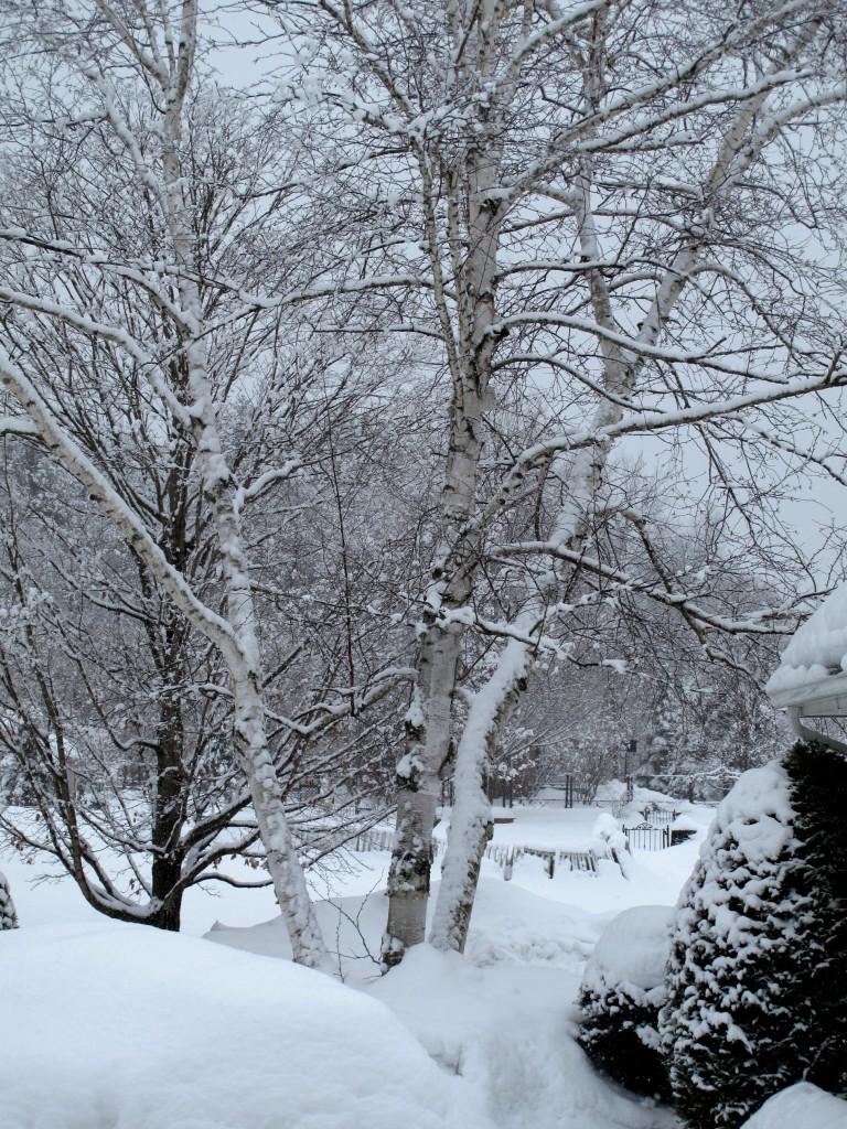 IMG_8400 201102 VT Winter Garden